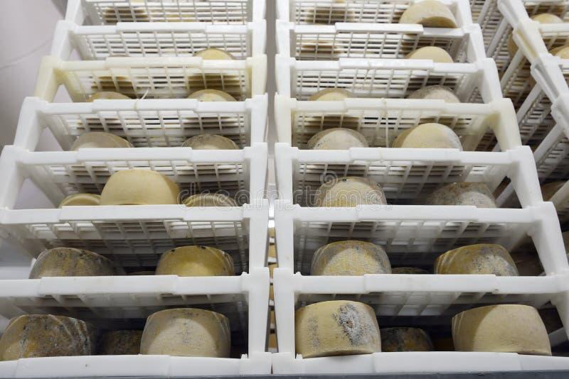 Ost som mognar i ett mejeri arkivbilder