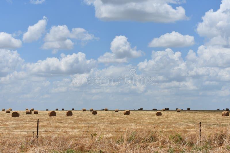 Ost-Texas Hay Field lizenzfreies stockfoto