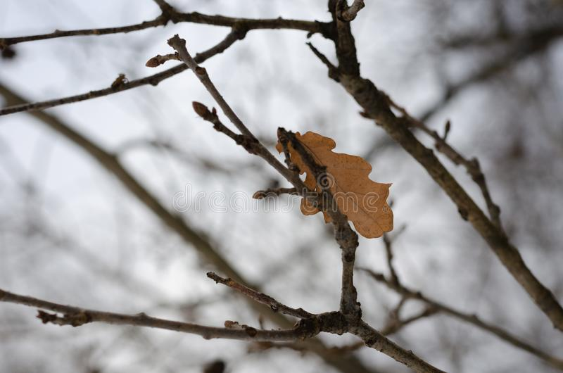 Ostatni żółty liść obrazy stock