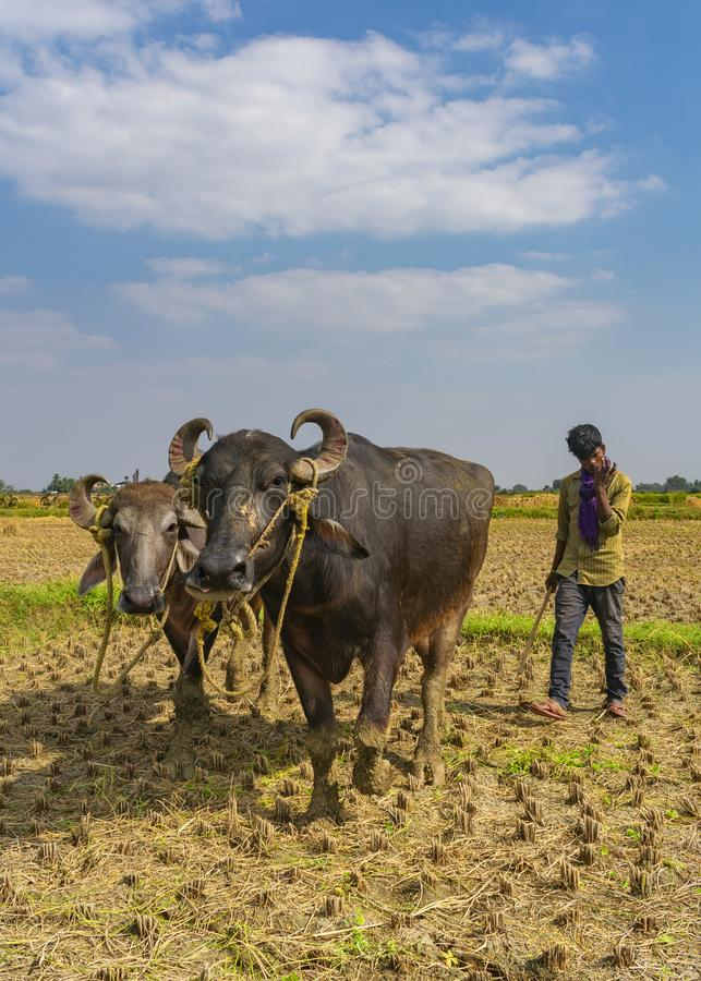 Ostatni corp pole w India obraz royalty free
