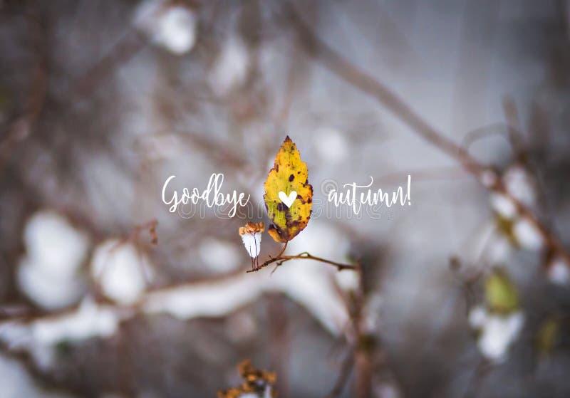 Ostatni jesień liść, gałąź w śniegu z tekst jesienią Do widzenia obrazy royalty free