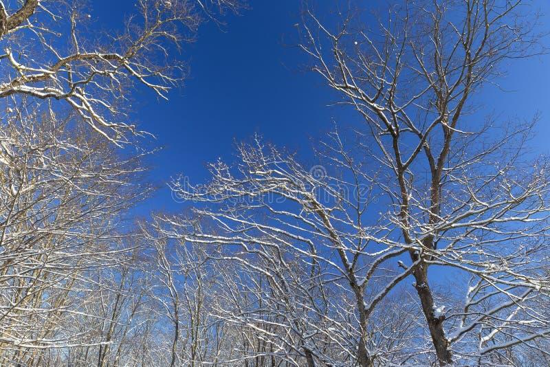 Ostatni roztapiający śnieg na gałąź drzewa w wiośnie obrazy royalty free