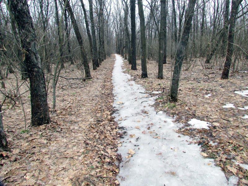 Ostatnia ścieżka zima zdjęcie royalty free