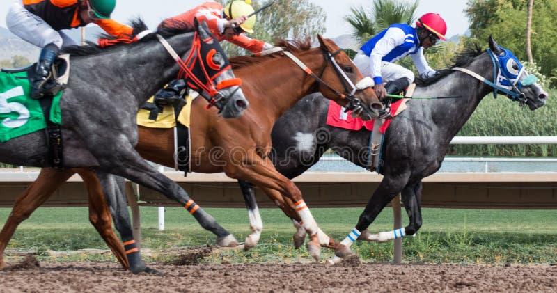 Ostatnie Końskie rasy W Arizona Do spadek obraz stock