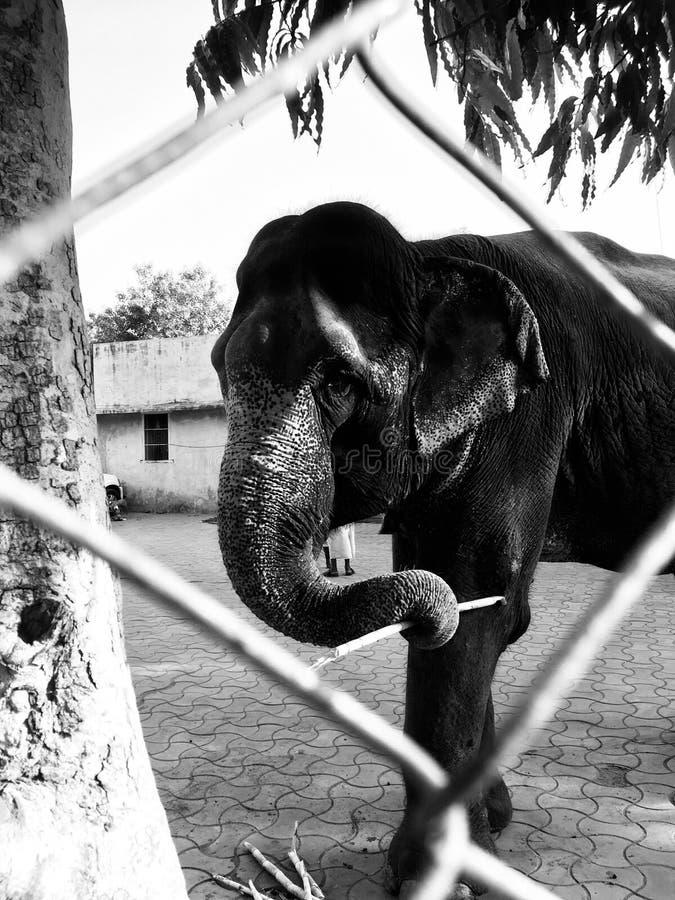 Ostello dell'elefante immagini stock