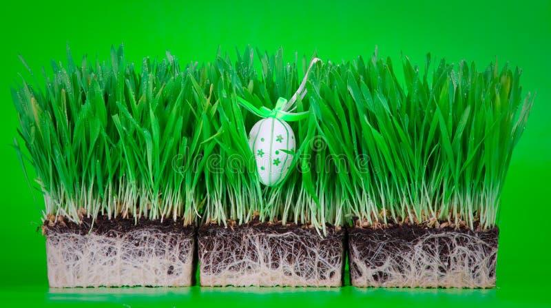 Osterei versteckt im Gras stockbilder