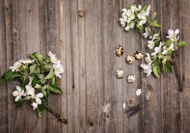 Ostereidekoration auf rustikalem hölzernem Hintergrund Wachteleier und Frühlingsapfelblüte auf einem alten hölzernen Hintergrund  stockbild