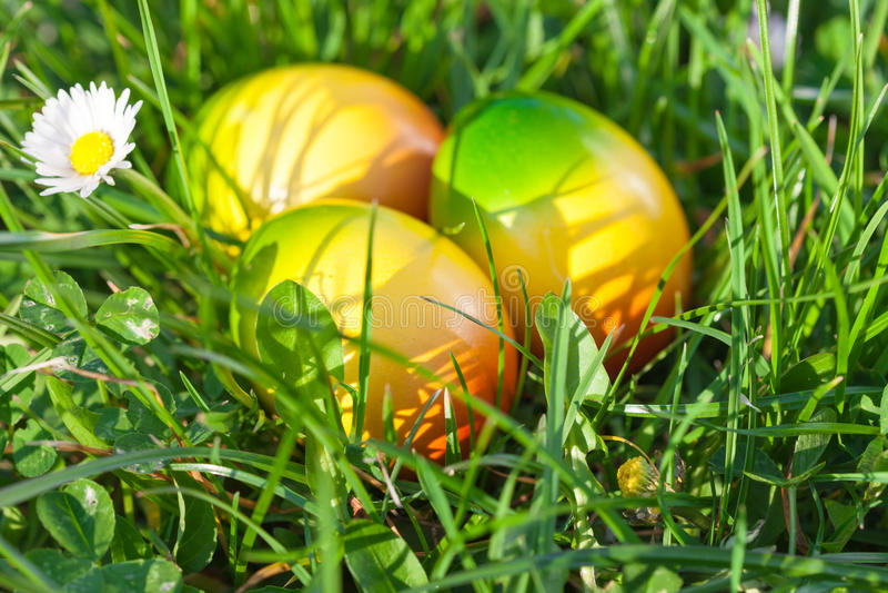 Ostereier auf grünem Gras lizenzfreies stockbild