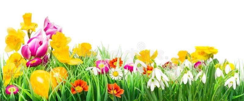 Ostereier, Blumen-Wiese, lokalisiert stockbild