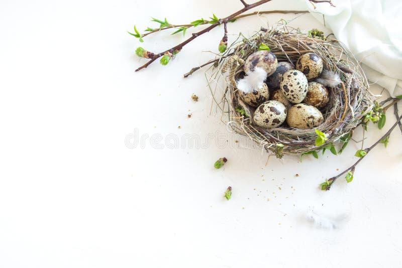 Ostereier im Nest stockfotos