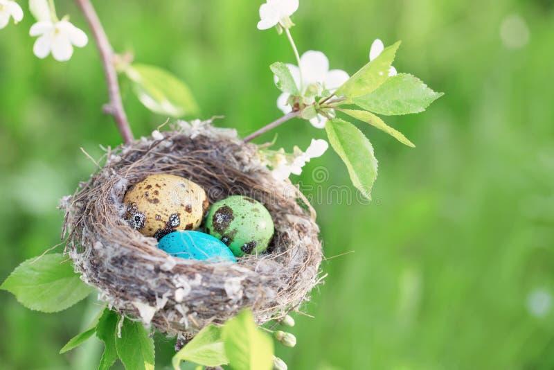Ostereier im Nest im Freien stockbild