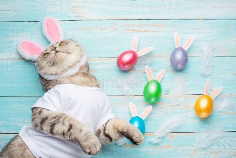Osterhase, Katze mit den Häschenohren und Ostern färbten mit Eiern und den Ohren Ostern und Feiertag lizenzfreie stockbilder