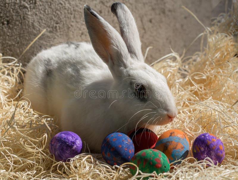 Osterhase mit bunten Eiern stockbild