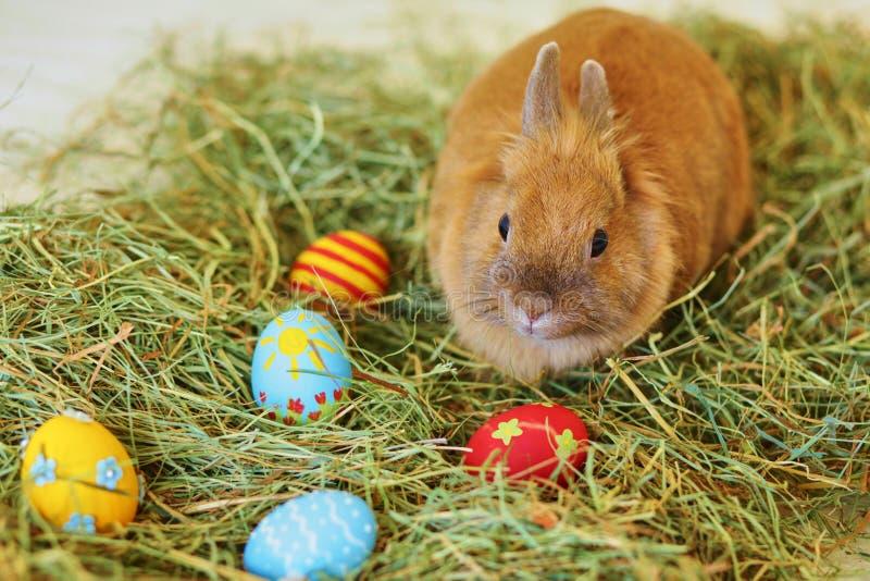 Osterhase mit gemalten Eiern im Heu stockfotografie