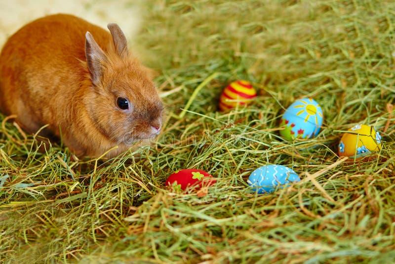 Osterhase mit gemalten Eiern im Heu lizenzfreie stockfotografie