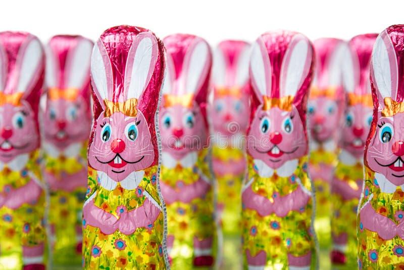 Osterhase oder Kaninchen lizenzfreie stockfotos