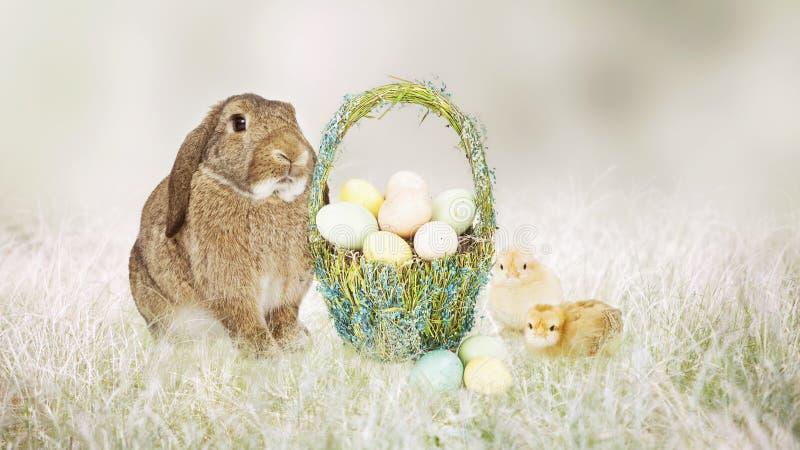 Osterhase und Küken mit Korb von Eiern lizenzfreies stockfoto