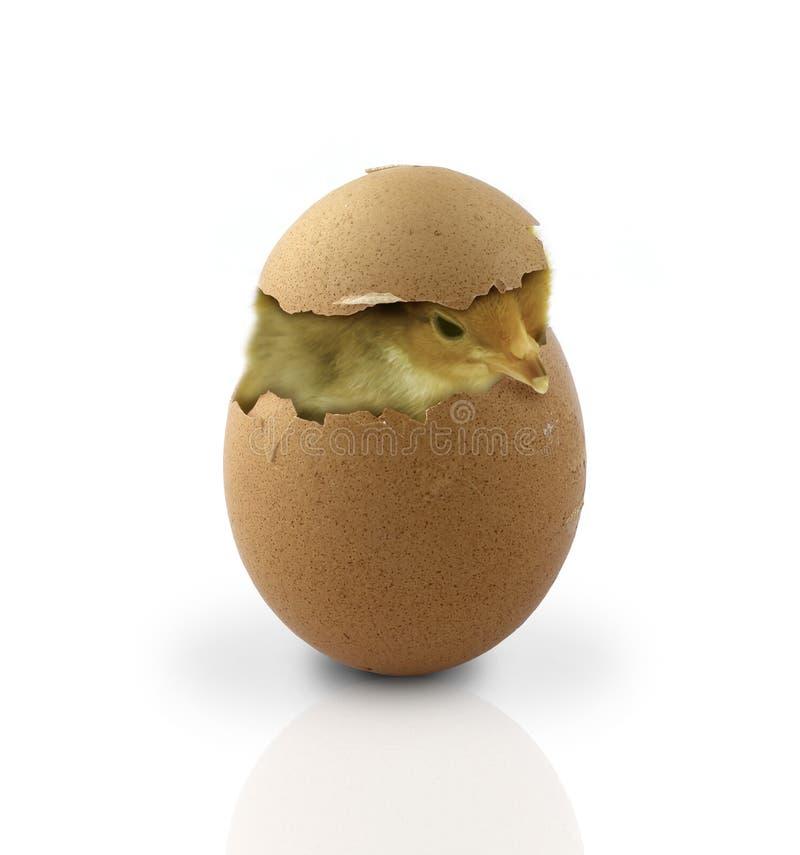 Ostern stockfoto