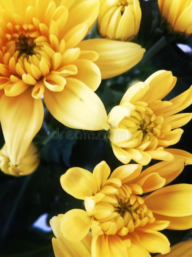 Ostern-Blumen stockbilder