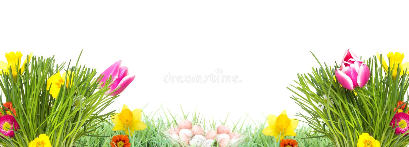 Ostern, Blumen-Wiese, lokalisiert, Fahne stockbilder