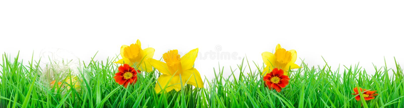 Ostern, Blumen-Wiese, lokalisiert, Fahne lizenzfreie stockbilder