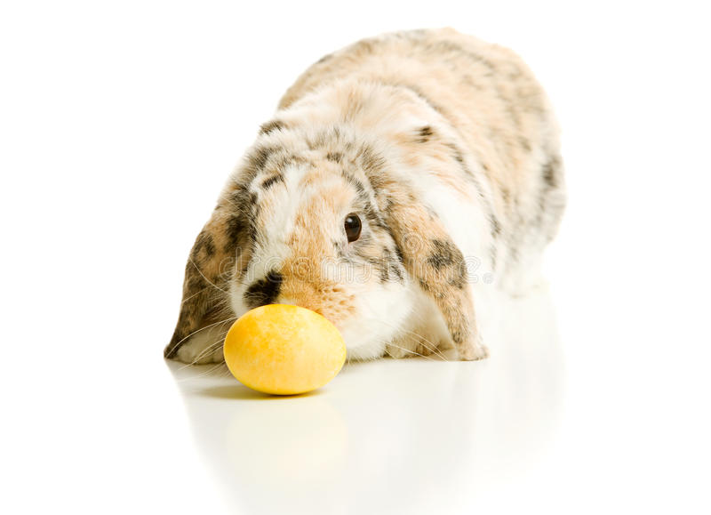 Ostern: Bunny Checks Out Yellow Easter-Ei lizenzfreie stockbilder