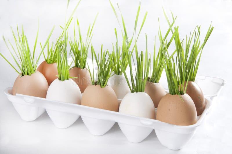 Ostern-Dekoration lizenzfreie stockfotos