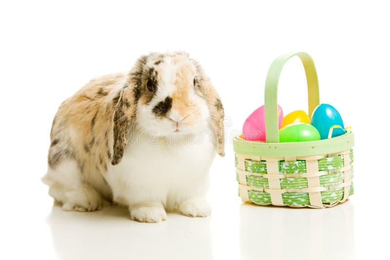 Ostern: Häschen auf Weiß mit Korb von Plastikeiern lizenzfreies stockbild