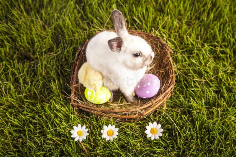 Ostern-Huhn und -kaninchen stockbild