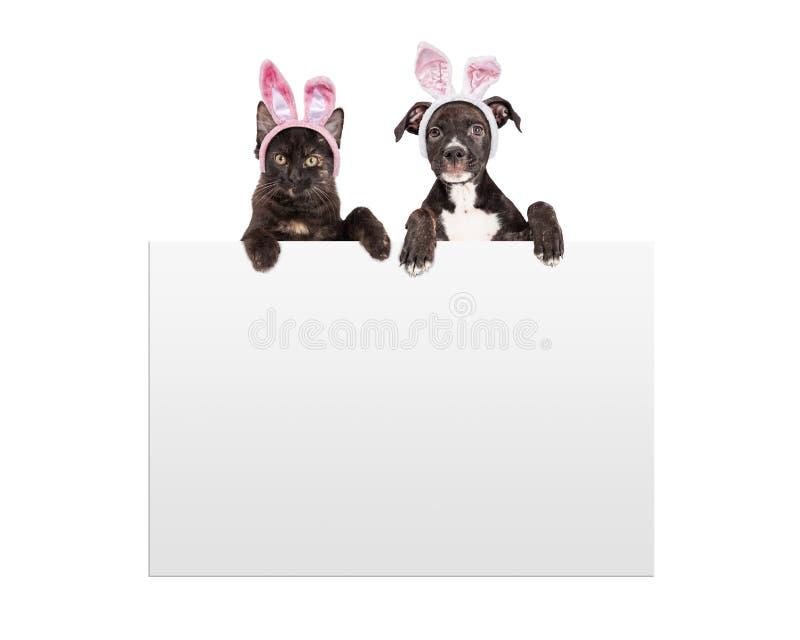 Ostern-Kätzchen und -welpe, die Zeichen halten stockfotografie