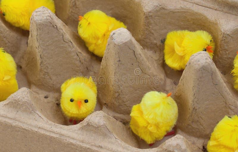Ostern-Küken in einem eggbox lizenzfreie stockbilder