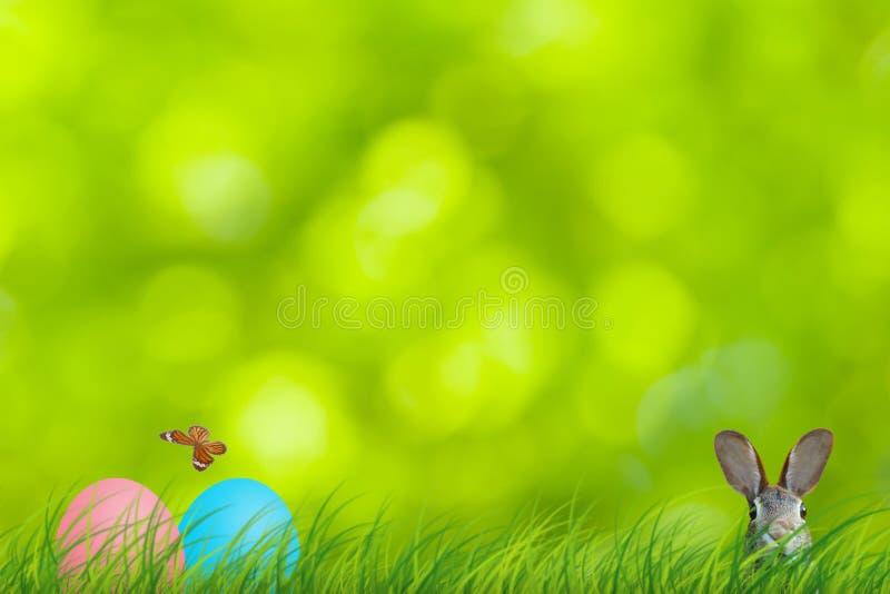Ostern-Kaninchen und Ostereier versteckt in einer bunten natürlichen Szene lizenzfreies stockbild