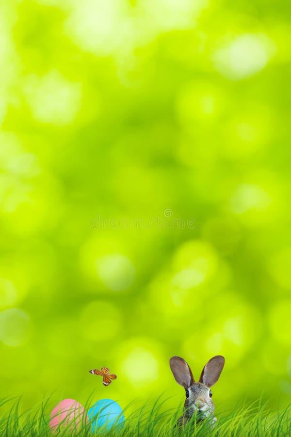 Ostern-Kaninchen und Ostereier versteckt in einer bunten natürlichen Szene stockfotos