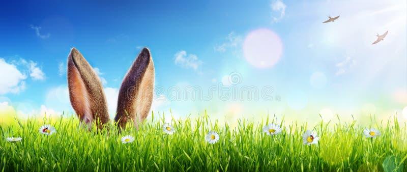 Ostern-Karten-Ohren von Bunny Appear In Grass stockfotos