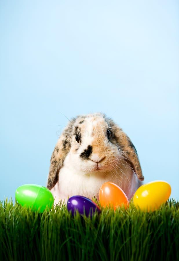 Ostern: Osterhase im Gras mit Korb von Plastikeiern lizenzfreies stockbild