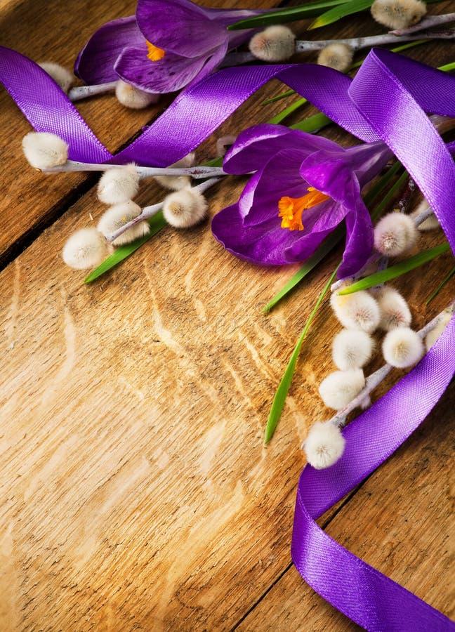 Ostern-purpurrote Krokusse im hölzernen Hintergrund lizenzfreies stockfoto