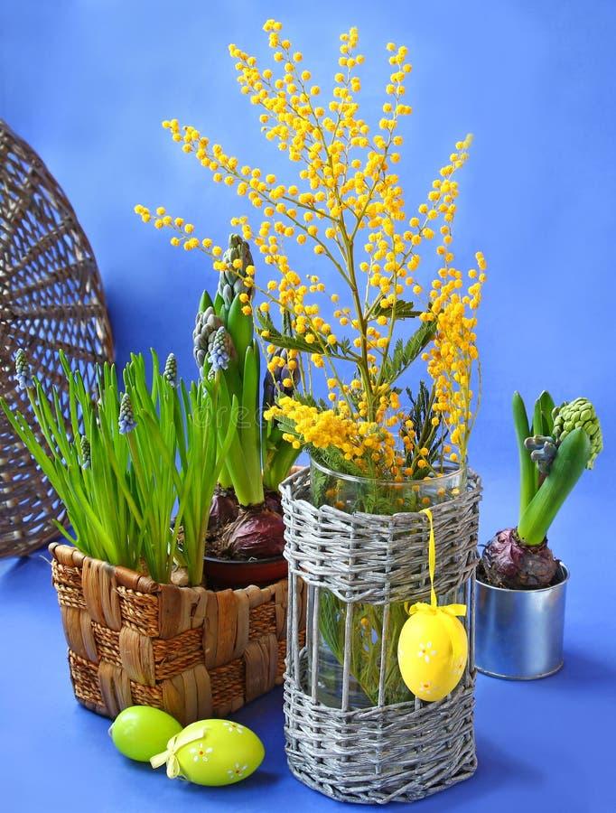 Ostern-Stillleben mit Mimose, Narzisse und Muscari stockbild