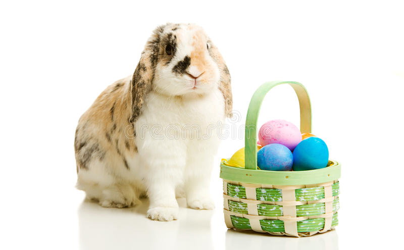 Ostern: Wirkliche Ostereier Bunny Sitting With Basket Ofs lizenzfreies stockfoto