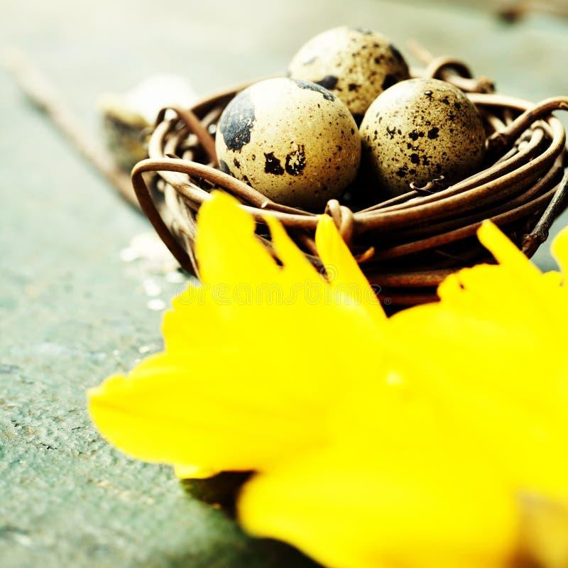 Ostern-Zusammensetzung mit Tulpen, bunten Eiern und Nest lizenzfreie stockfotos