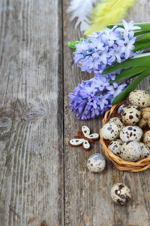 Ostern-Zusammensetzung mit Wachteleiern und -hyazinthe stockfotos