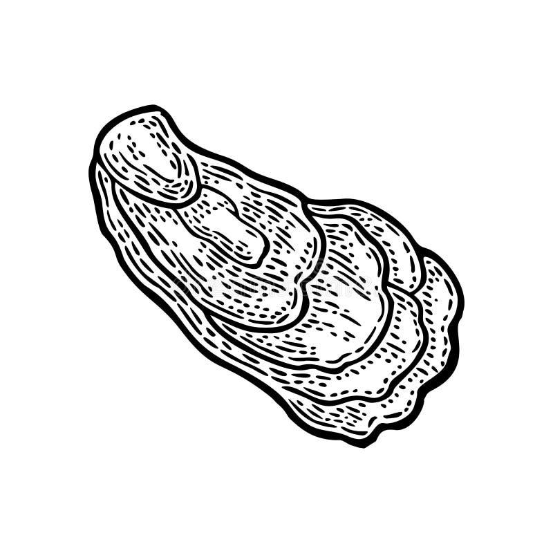 Ostra aislada en el fondo blanco Grabado negro del vector del vintage ilustración del vector