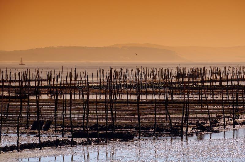 Ostra-cultivo en la bahía de Arcachon foto de archivo