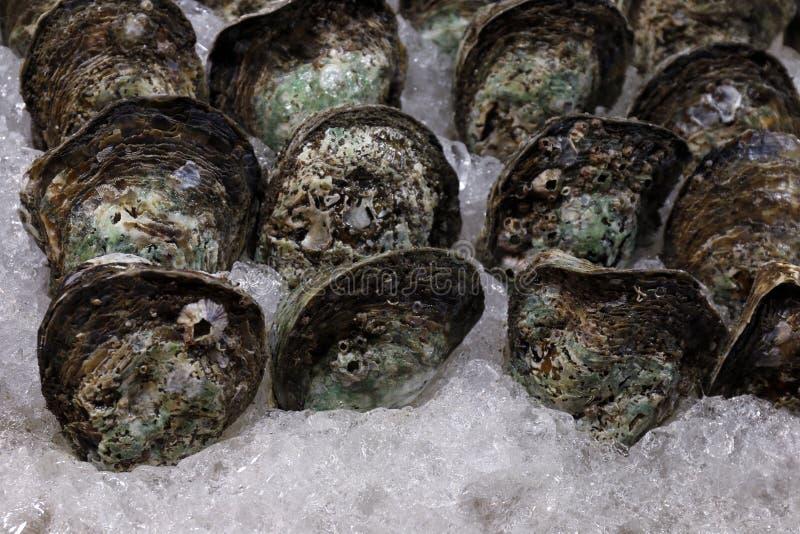 Ostra en el hielo, ostra cruda fresca, foco selectivo de la ostra del marisco fotografía de archivo