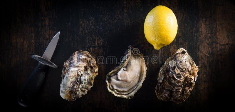 Ostras abertas na placa de pedra da ardósia com a faca do limão e da ostra fotografia de stock