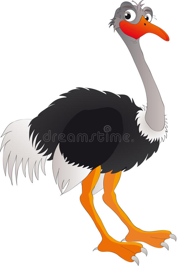 Ostrich stock illustration