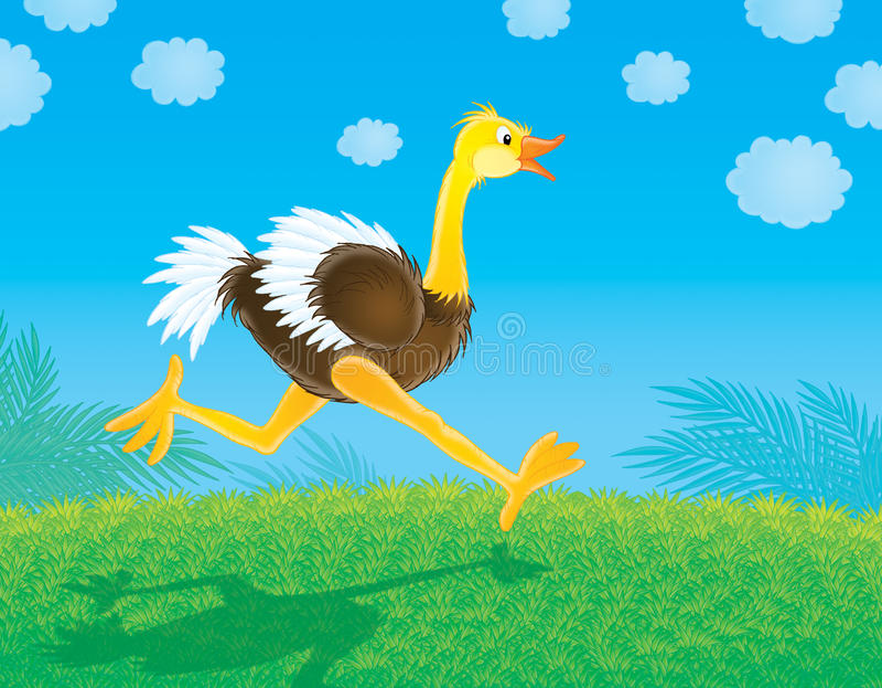 Ostrich stock illustration