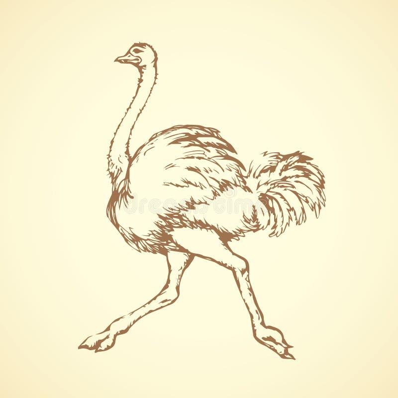 Ostrich bakgrund som tecknar den blom- gräsvektorn vektor illustrationer