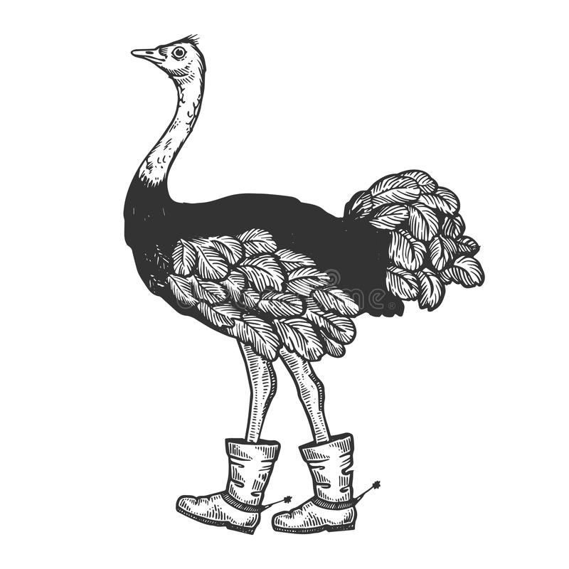 Ostrich in boots with spur animal engraving vector. Ostrich in boots with spur bird animal engraving vector illustration. Scratch board style imitation. Black royalty free illustration