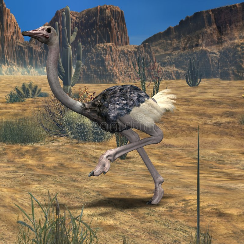ostrich för djur 3d vektor illustrationer