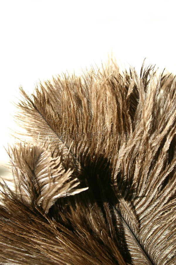 Ostrich feathers stock photos